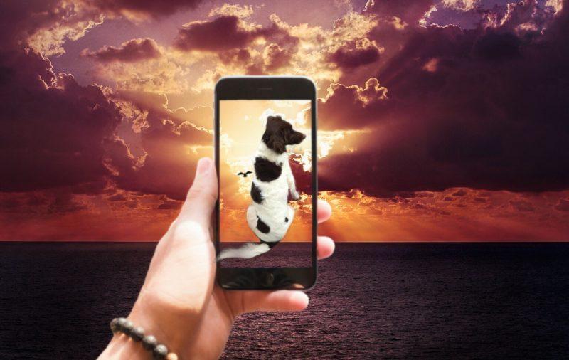 Dieses Foto wurde mit Pics Art bearbeitet. Der Hund wurde von der Schülerin mit dem Smartphone fotografiert und der Bildhintergrund kam aus der Bildergallerie von Pics Art.